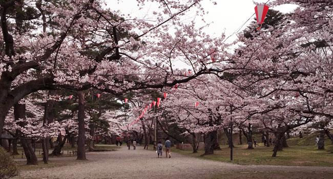 sensyu_spring5