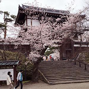 sensyu_spring8