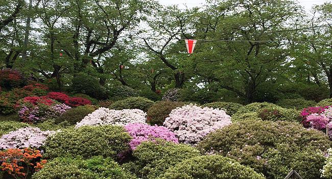 sensyu_spring9